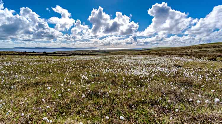 The Bog Cotton on Benwee Head, Co Mayo, creates an almost perfect symetery with the fluffy white clouds over Broadhaven Bay. Photo: Anthony Hickey