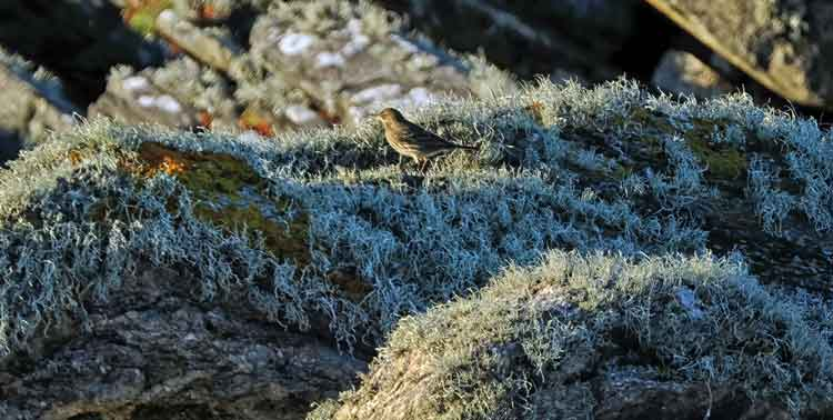 The rocks at Annagh Head are home to many small birds. Photo: Anthony Hickey