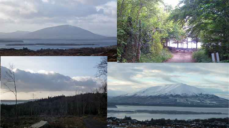 Drummin Wood and views of Nephin and Lough Conn. Photos Anthony Hickey