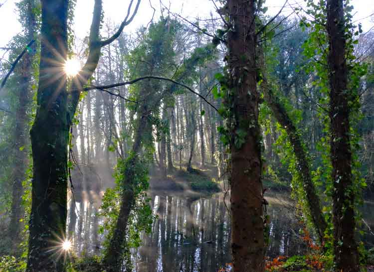 Sun flares and starbursts between the branches at the duck pond in Belleek Wood, Ballina, Co Mayo. The lower sun flare is the sun reflecting off the water. Photo: Anthony Hickey