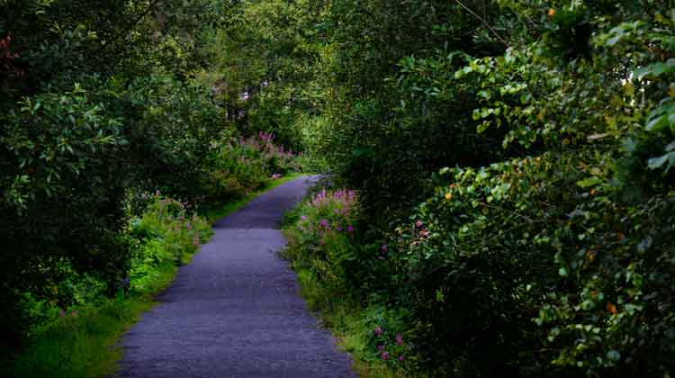 Wildflowers decorate the trails in McMahon Park, Claremorris, Co Mayo. Photo: Anthony Hickey