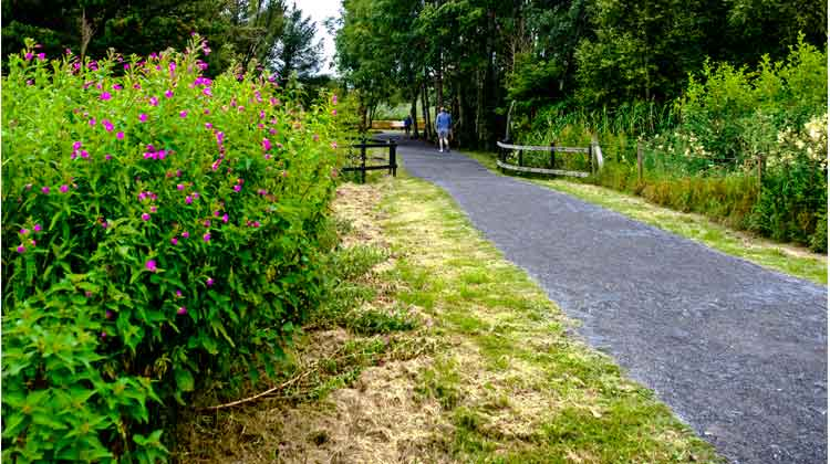 Walking the loop around Clare Lake, McMahon Park, Claremorris, Co Mayo. Photo: Anthony Hickey