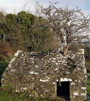 The 'ragtree ' protruding from the roof of the chapel over St. Mary's Holy Well, Tobar Mhuire, Rosserk, Ballina, Co Mayo. Photo: Anthony Hickey