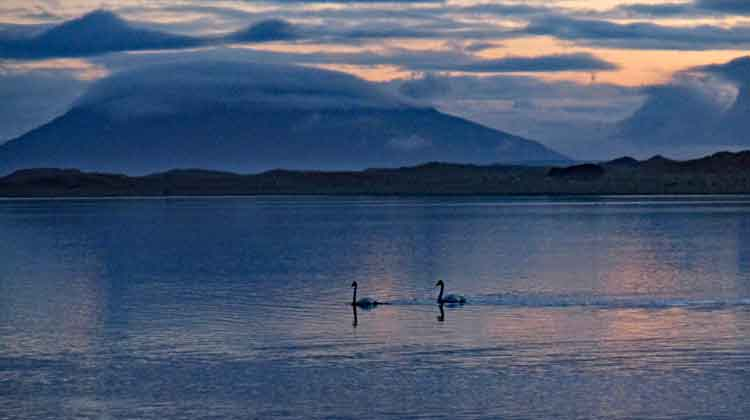 Swan Lake: Swans on Cross Lough, with Slievemore, Achill, in the background, January 4, 2016. Photo: Anthony Hickey