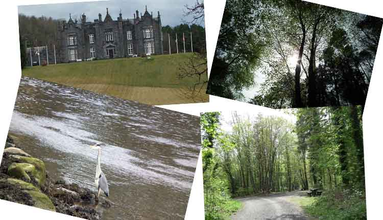 Scenes from Belleek Wood, Ballina, Co Mayo, including a Grey Heron on the banks of the River Moy and Belleek Castle Hotel. Photo: Anthony Hickey