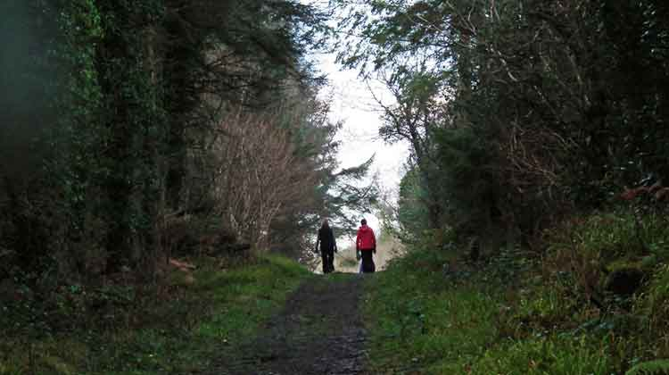 Drummin Wood near Pontoon, Co Mayo, is a forest walk with lake and mountain views. Photo: Anthony Hickey