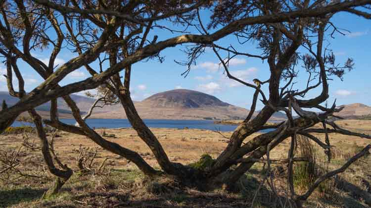 A view of Slíabhraon overlooking Lough Feeagh through a gorse bush. Photo: Anthony Hickey / Mayo.ME