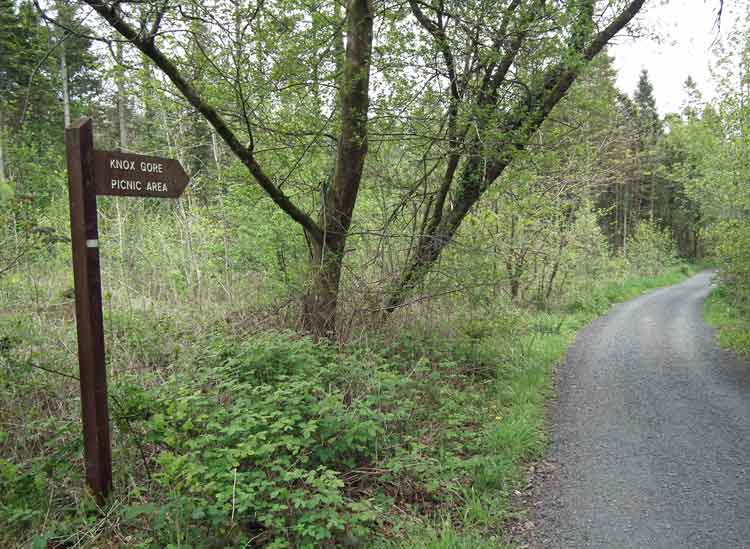 The trail that takes you to the Knox-Gore picnic area in Belleek Wood, Ballina, Co Mayo. Photo: Anthony Hickey