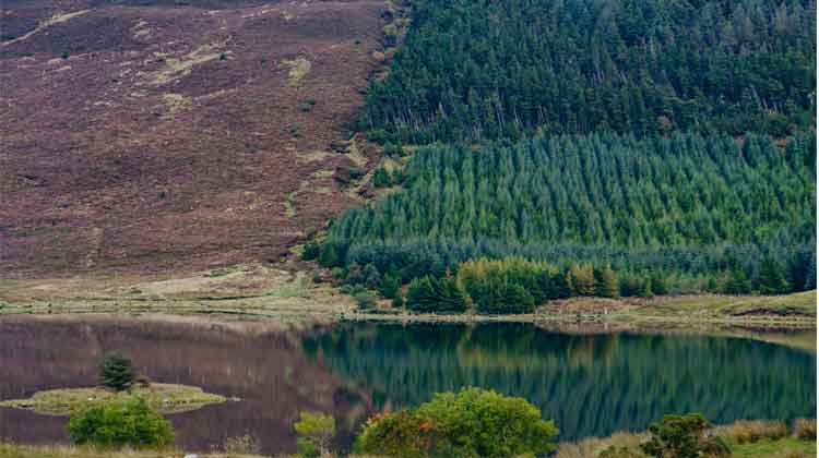 The green of the conifer forest and fading colours of the mountain heather on Tristia create a beutiful reflection in Drumleen Lake. Photo: Anthony Hickey